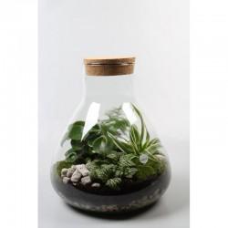 Grand terrarium poire
