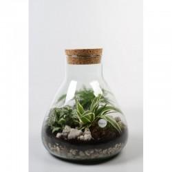 Petit terrarium poire