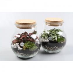 Petit terrarium boule lumineux