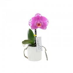 """Orchidée """"Singolo"""" marbrée"""