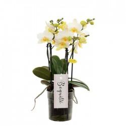"Orchidée ""Boquetto"" blanche"